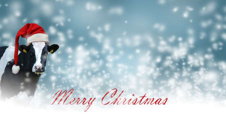 Merry Christmas with snow and Cow.Christmas greeting card with cow on a white background Archivio Fotografico - 159241649