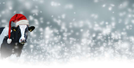 Merry Christmas with snow and Cow.Christmas greeting card with cow on a white background Archivio Fotografico