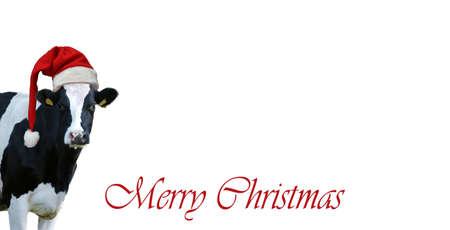 Merry Christmas with snow and Cow.Christmas greeting card with cow on a white background Archivio Fotografico - 159241386