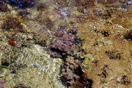 reef with soft coral from the Mediterranean