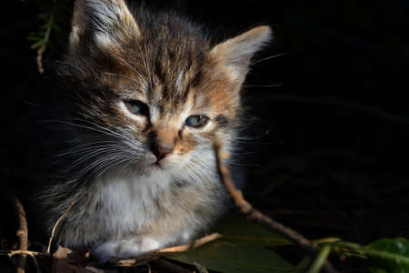 Little tabby kitten. Little tabby kitten with blue eyes looking curiously.Adorable little pet. Cute baby animal. Archivio Fotografico - 159361010