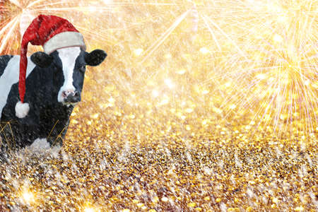 Cow fireworks new year greeting.Cow New Year greetings.Golden Glitter Background