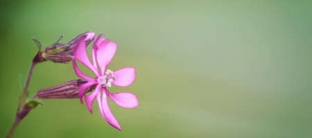 Small pink flower.Template with a small pink flower.