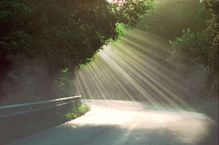 Rays of morning sunlight penetrating the leaves of trees and the mist rising into the air.natural landscape