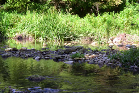 Beautiful reflection of plants in the river bed, Stok Fotoğraf - 163668322