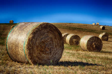 Harvested landscape with straw bales between fields