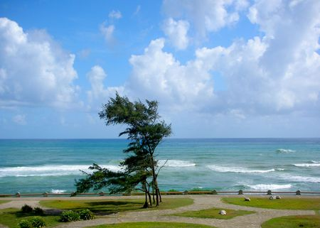 ocean shore and a tree on windy day         Imagens