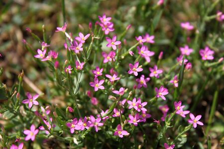 tiny wild flowers closeup