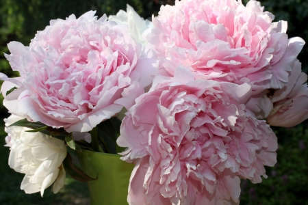 pink peonies in vase-closeup