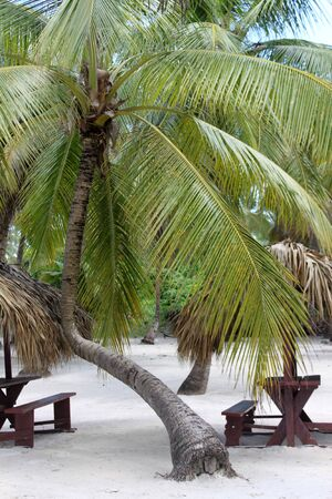 Picknic tables under a bent palm tree