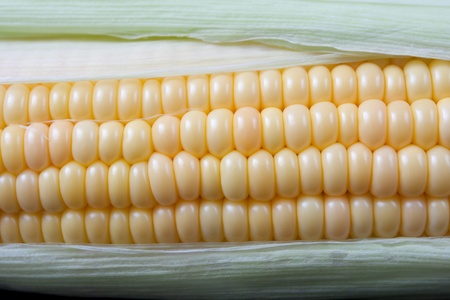 bens: yellow corn closeup with green leafes arround it