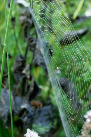 water drops on a spiderweb in a green field photo