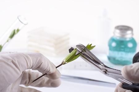 clonacion: Laboratorio clonación experimento sobre plantas