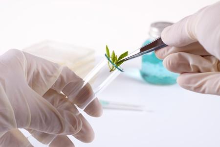 clonacion: Laboratorio clonaci�n experimento sobre plantas