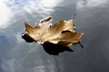 single floating brown leaf closeup with sky reflection in the water Stock Photo - 9303800