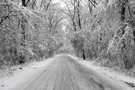 forest road in the winter covered with  snow all white photo