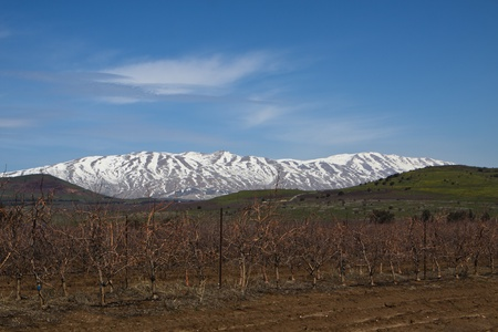 golan heights with hermon mountain covered with snow at the syrian border