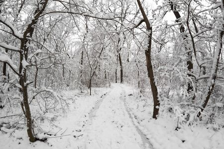 a road in the snow covered forest Stock Photo - 9310702