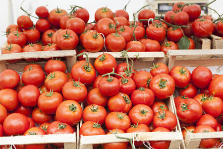 Red fresh collected tomatoes in boxes at a market photo