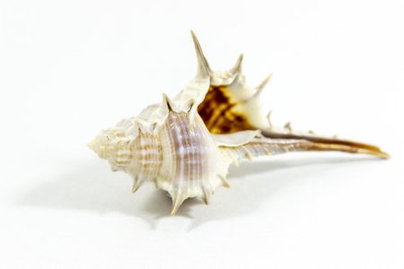Clear shot of beautiful seashell with white background Zdjęcie Seryjne