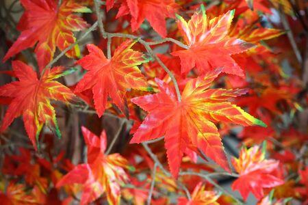 bunchy: bouquet artificial maple , Vivid color leave are orange. Stock Photo