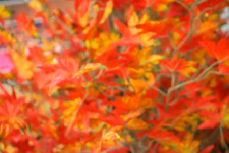 bunchy: Abstract artificial flowers maple blurred background .