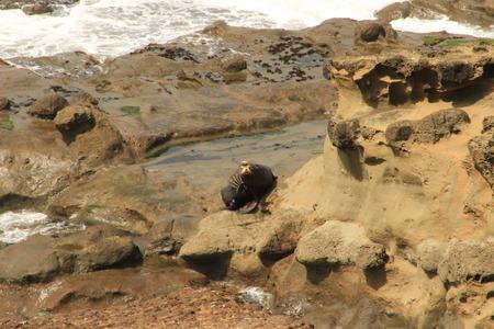 sea lion: Sea Lion Facing Stock Photo