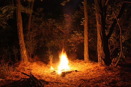Fire burning at night in a forest glade photo