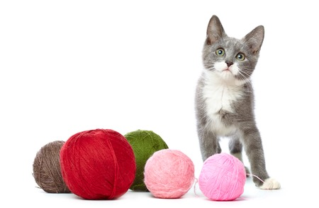 Kitten with a lot of balls of yarn.  photo