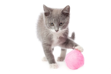 Kitten with a ball of yarn. photo