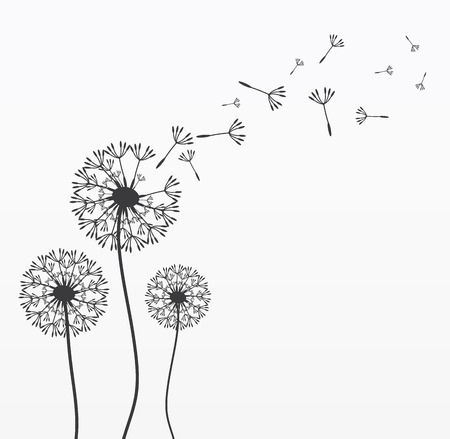 Three  dandelions. Wind is blowing on them. Black and white. Vector