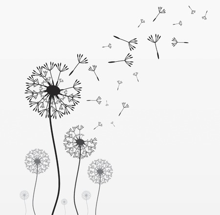 Seven dandelions. Wind is blowing on them. Black and white. Vector illustration