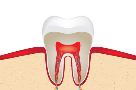 periodontal: tooth vector Illustration