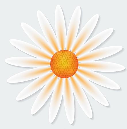 marguerite: Camomile flower on gray background. Vector illustration