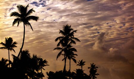 Silhouettes of coconut palm trees on beach at sunset