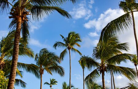 Branches of coconut palm trees and blue sky with clouds Stok Fotoğraf