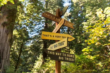 A signpost indicates in all directions where the largest trees can be seen in Redwood National Park, California, USA.