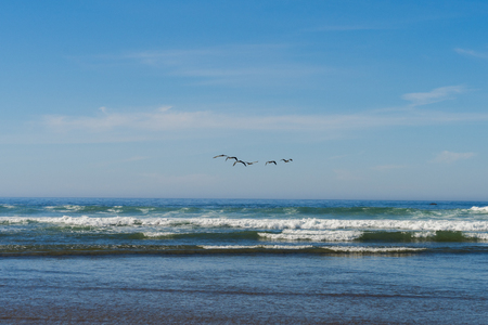A flock of seagulls flies over  the Pacific Ocean in Cannon Beach, Oregon, USA.