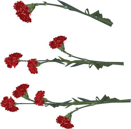 카네이션 꽃 일러스트