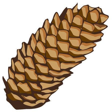spruce: cono de Picea
