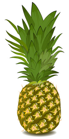 pineapple Stock Vector - 8446150