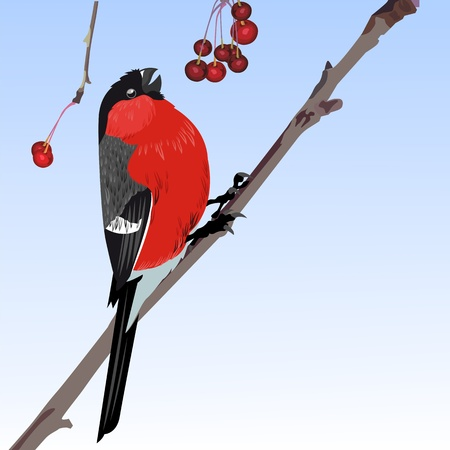 The one bullfinch winter Vector