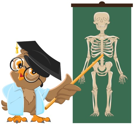 Owl teacher. Anatomy Lesson, the study of the human skeleton. Vector cartoon illustration Vector