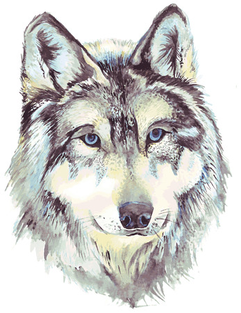 gray wolf: Wolf head profile. Watercolor drawing in vector format