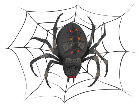 spider: Black big scary spider sitting center of web. Poison spider. Illustration in vector format