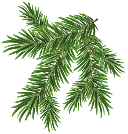 Green lush spruce branch. Fir branches. Isolated illustration in vector format Vettoriali