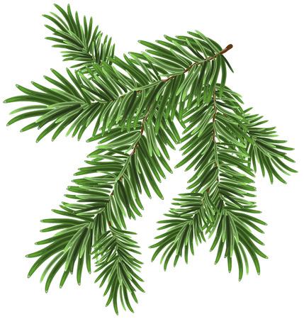 arbol de pino: Verde rama de abeto exuberante. Ramas de abeto. Ilustración aislada en formato vectorial