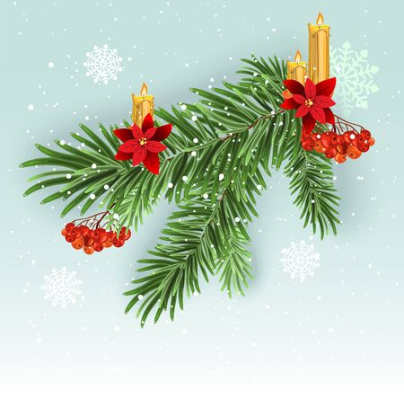 Christmas tree branch decoration. Green lush spruce branch. Fir branches. Isolated illustration in vector format