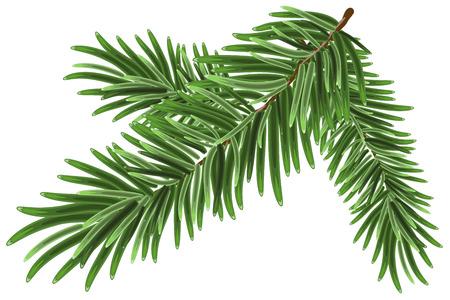 Weelderige groene nette tak. Dennentakken. Geïsoleerde illustratie in vector-formaat Stockfoto - 46035405