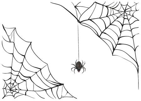 Spiderweb. Big black spider web. Black scary spider of web. Poison spider. Illustration in vector format